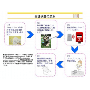 歯周病菌・DNA検査キット(イヌ用)