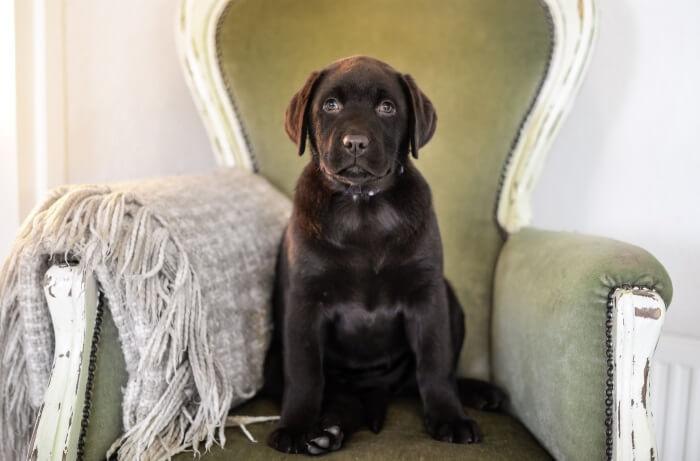 愛犬の遺伝性疾患を把握するための遺伝子検査