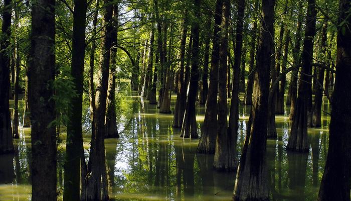広東省の水に浸かった森