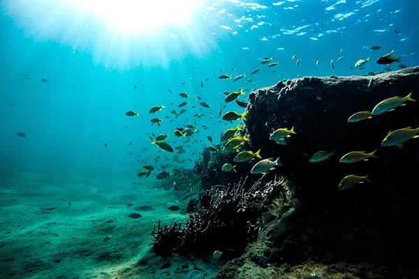 海底と魚の群れ