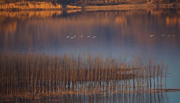 黄河と白鳥