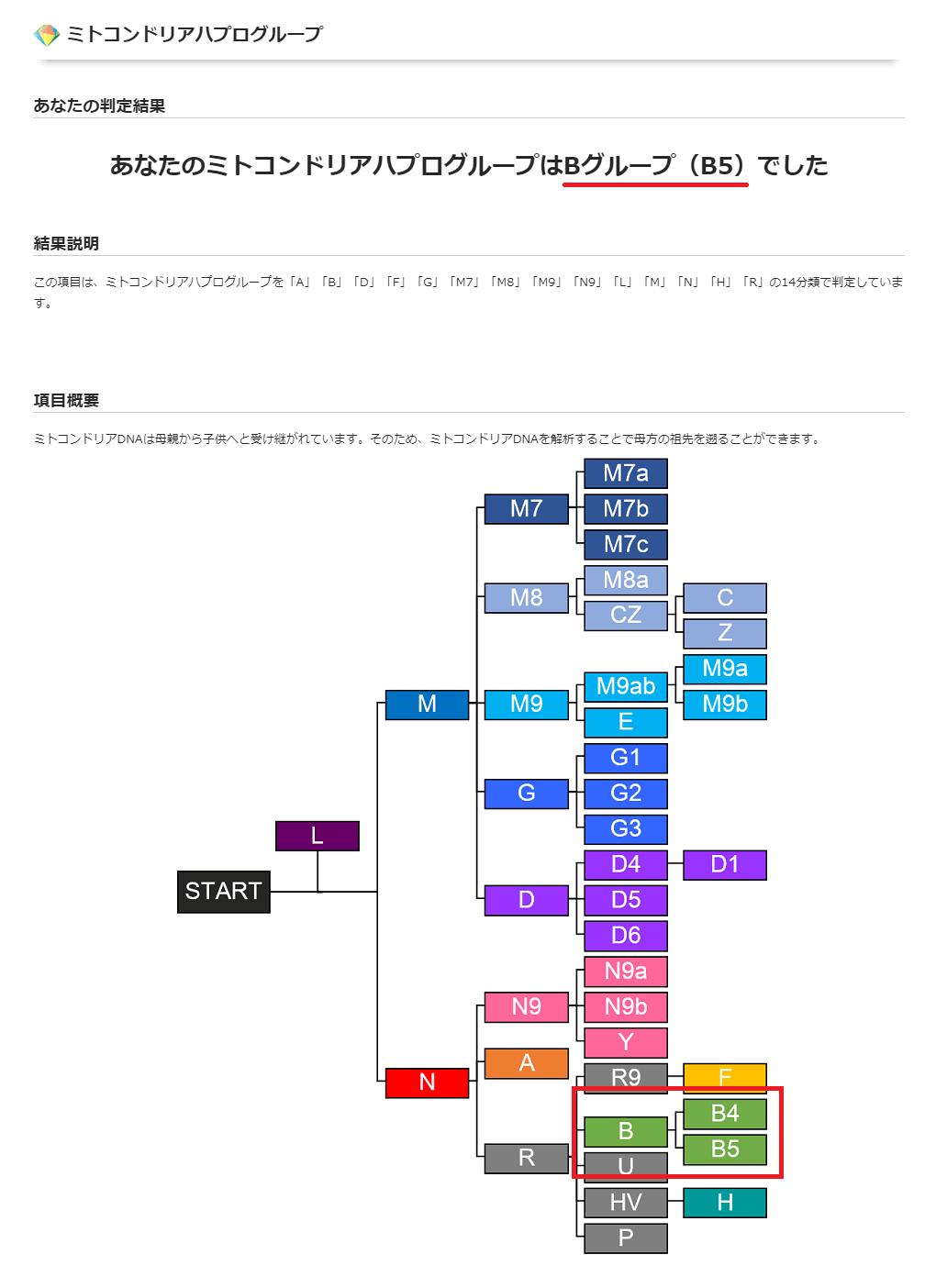 ハプログループの結果画面にアップグレードが適用されている