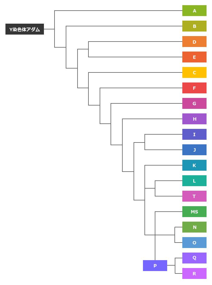 Y染色体ハプログループの簡易分岐図