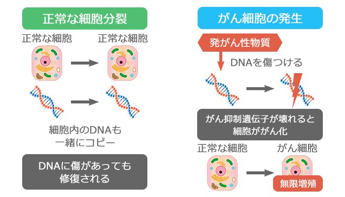 通常の細胞分裂と細胞のがん化