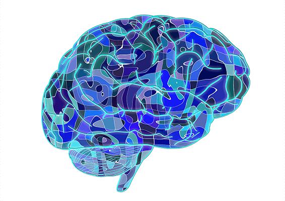 青い脳のイラスト