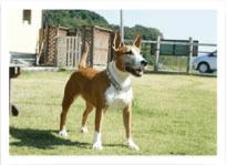 犬種鑑定イメージ